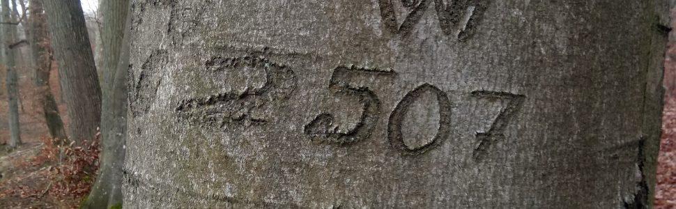 Tajemnicze napisy na drzewach